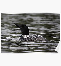 First Loon of the Season Poster