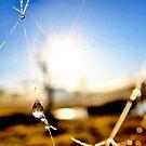 Dewdrop by Kym Howard