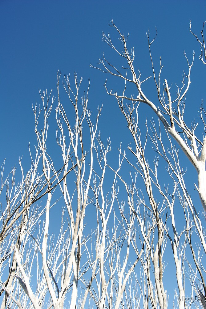 Snow Gums Reaching Up To The Blue - Blue Rag Range Track by MissyD