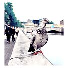 Pensive pigeon by Gianmarco Caprio