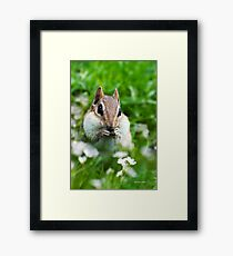 Cute Chipmunk Framed Print