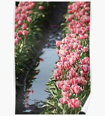 Tulip Field Poster