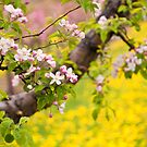 Spring Blossoms by Tracy Riddell