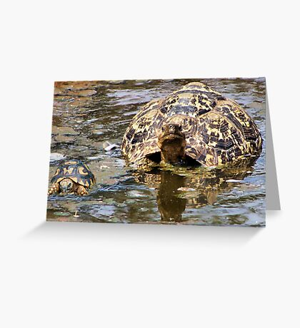 JUVENILE AND MOTHER - MOUNTAIN - LEOPARD TORTOISE – Geochelone pardalis Greeting Card