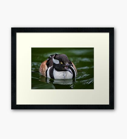 Calling out Mrs Hoody Framed Print