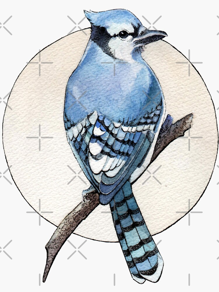 Blue Jay by Elenanaylor