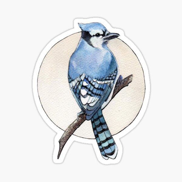 Blue Jay Sticker