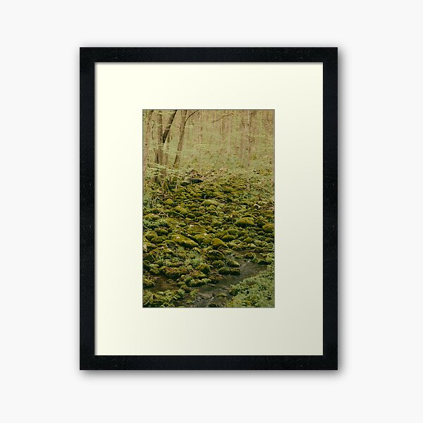 Mossy Stream Framed Art Print