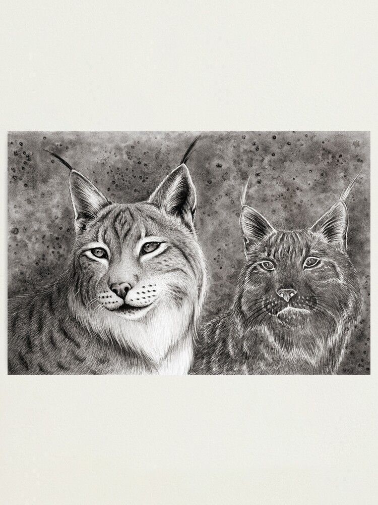 Alternate view of Ever Watchful Eurasian Lynx Photographic Print