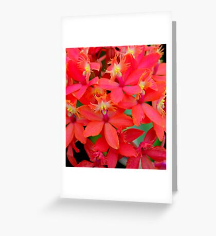 Orange Orchid Cluster Greeting Card