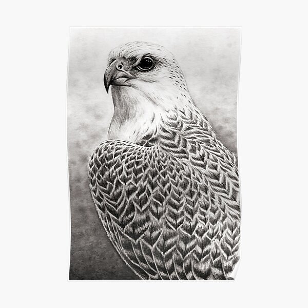 The Gyrfalcon Poster