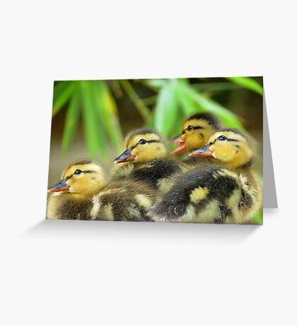 Duckling Quack-tette  Greeting Card