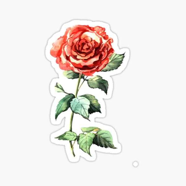 Rose aquarelle Sticker