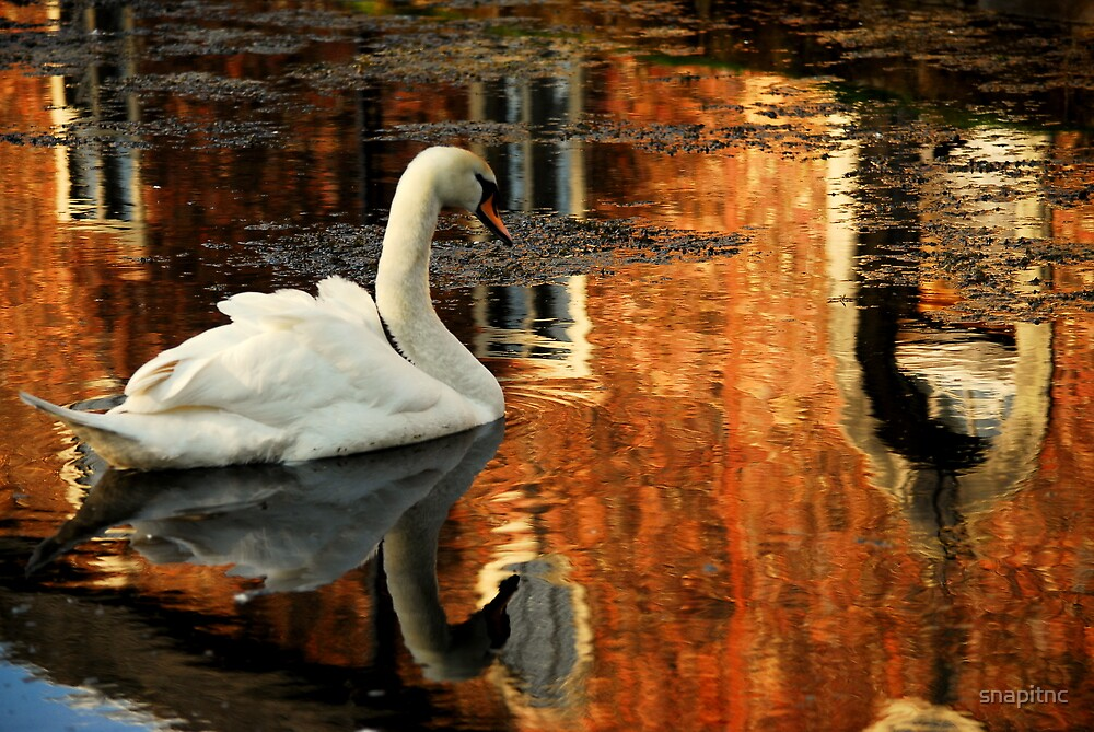 """REFLECTIONS IN THE MOAT"" by snapitnc"