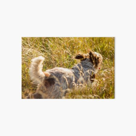 Follow my tail Spinone Art Board Print