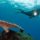 Scuba Diver shining torch by Table Coral by Sami Sarkis