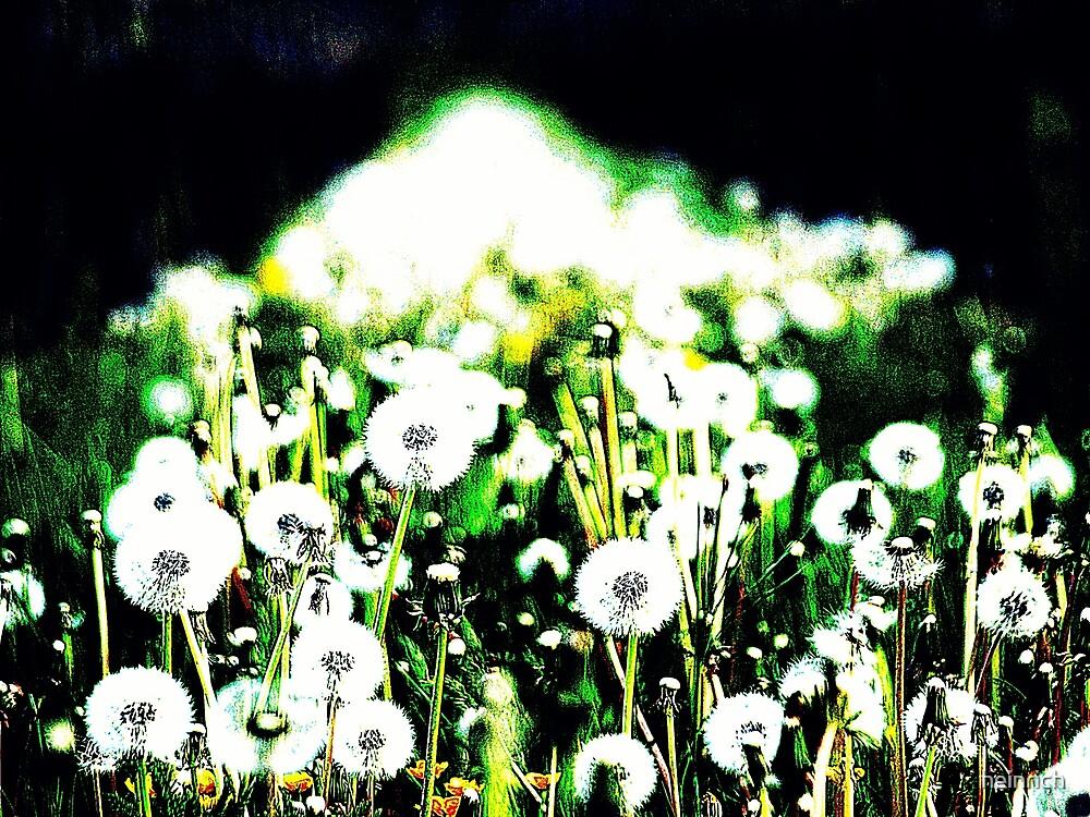 Dandelion clock by heinrich