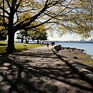 Vancouver - Stanley Park - Tree Along The Path by rsangsterkelly