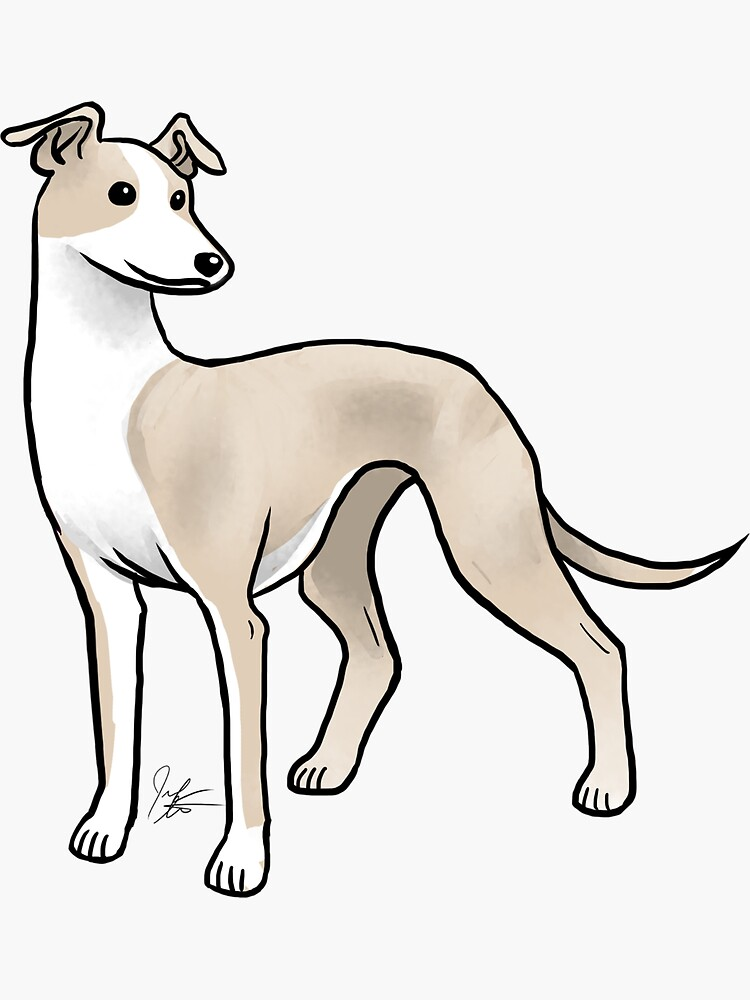 Whippet by jameson9101322