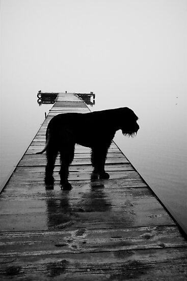 Misty morning by Anton Alberts