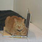 Cat Pad by photoclimber