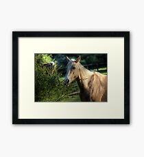 """""""Has anyone seen my idiot brother?"""" Framed Print"""