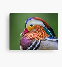 Mandarin Portrait Canvas Print