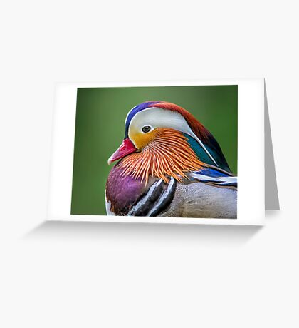 Mandarin Portrait Greeting Card