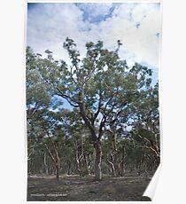 Woodlands Poster