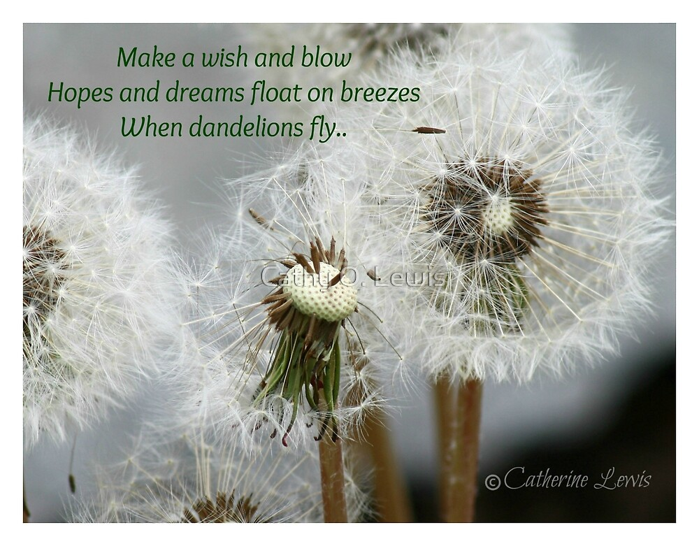 Dandelion Wishes by Cathy O. Lewis