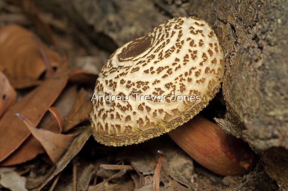 Mushroom by Andrew Trevor-Jones