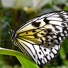 The Butterfly Farm - Phuket by Karen Stackpole