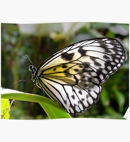 The Butterfly Farm - Phuket Poster