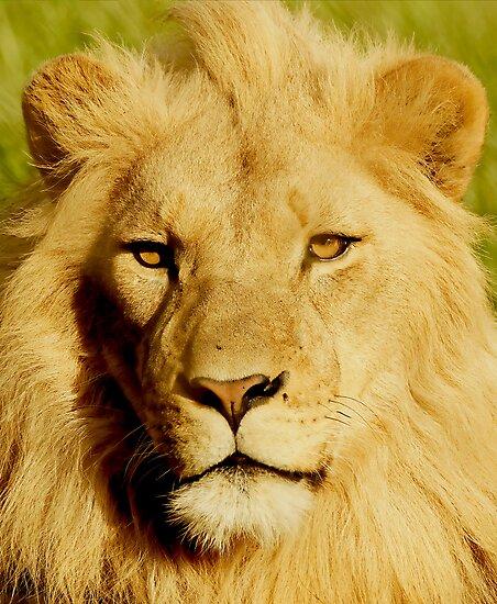 I'm King by Anton Alberts
