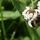 'Bee' still and listen by Edward Gunn