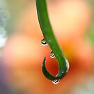 Orange droplets   by PhotoTamara
