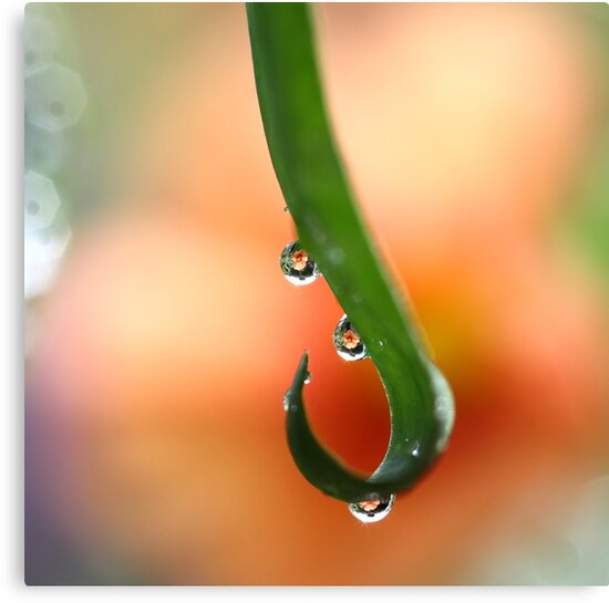 Orange droplets   by PhotoTamara