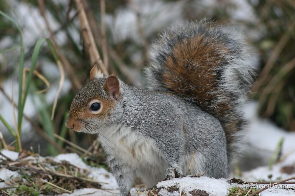 Squirreling Around by Edward Gunn