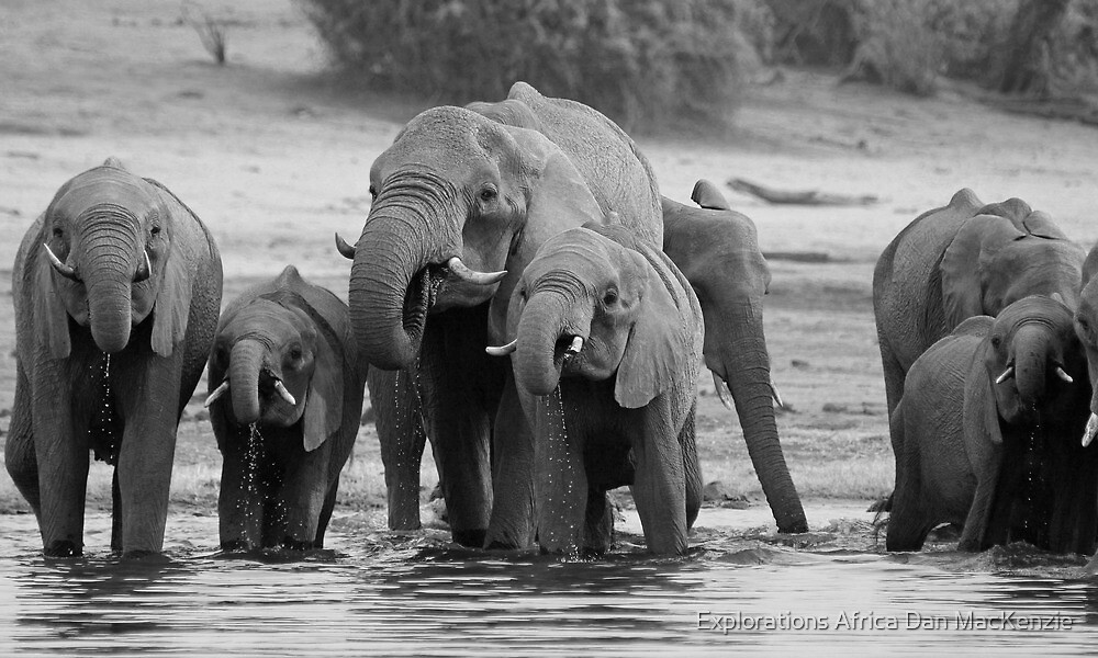 All together now! by Explorations Africa Dan MacKenzie