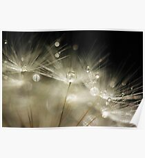 Dandelion macro Poster