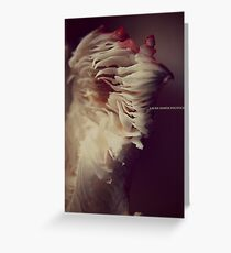 LAURA SHAFER PHOTOGRAPHY #505 Greeting Card