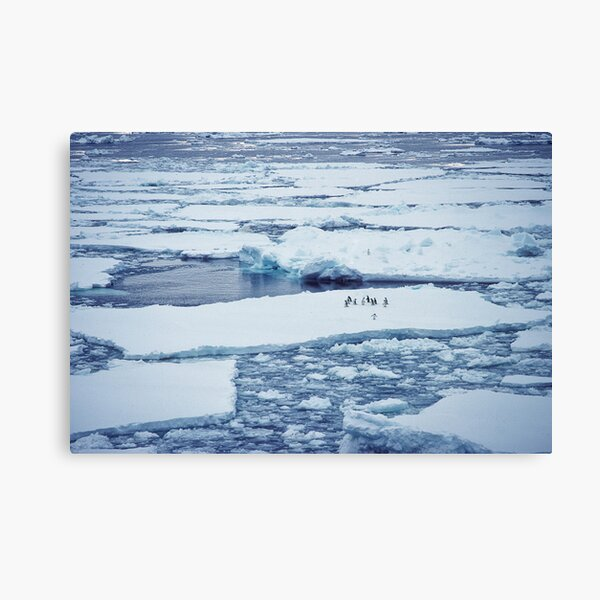 Penguins on Ice Pack Canvas Print