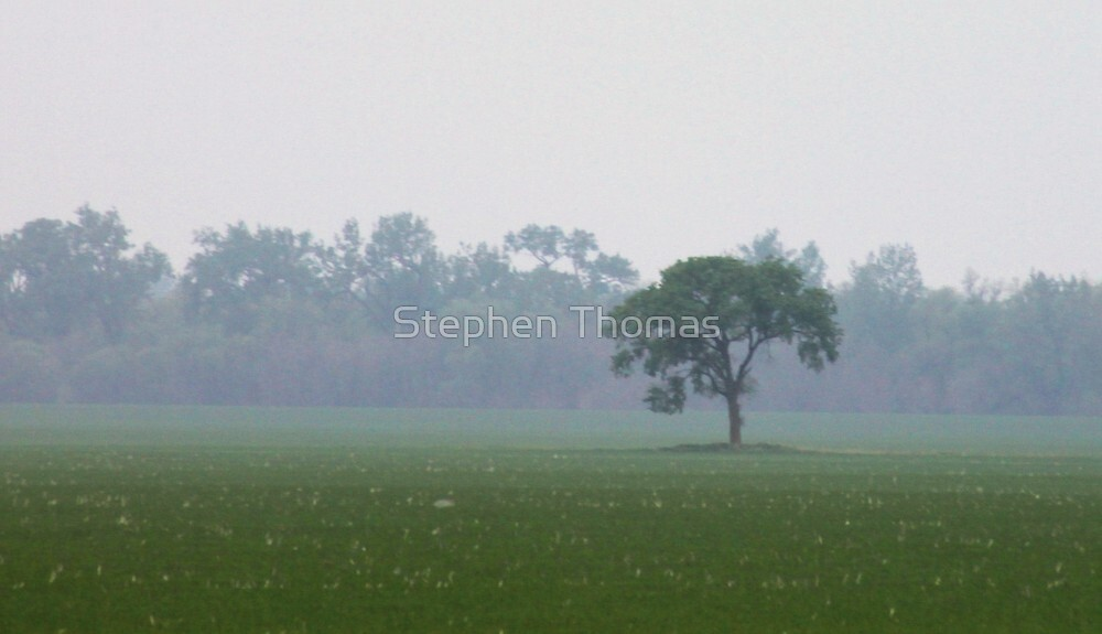 At The Edge Of The Mist by Stephen Thomas