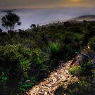 The Path Less Travelled by Adam Burke