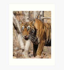Ranthambore Tiger Art Print