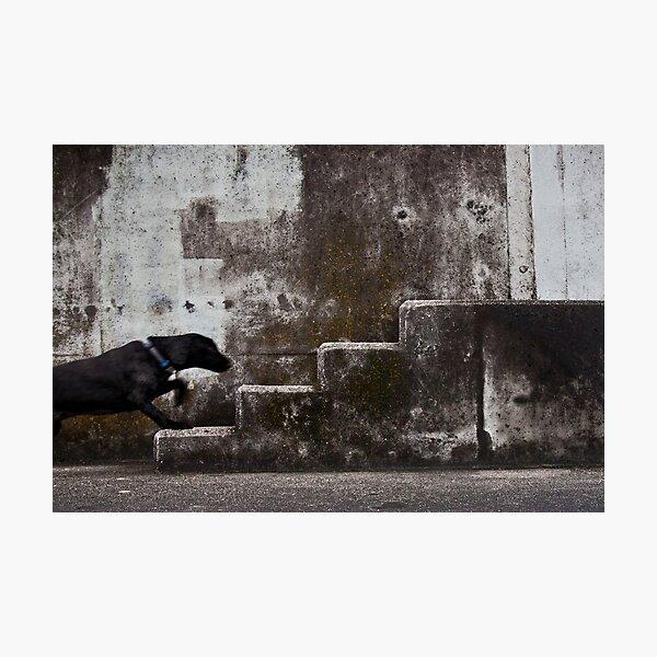 Urban animal Photographic Print
