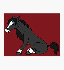 Black Horse with Blaze Photographic Print