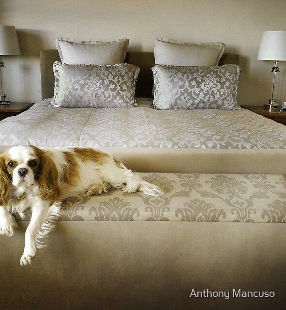 boudoir de lucille by Anthony Mancuso
