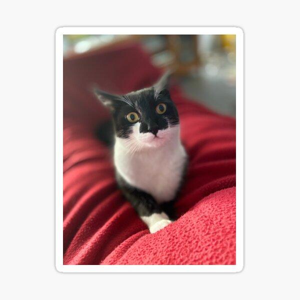Mischievous Nelson kitty cat tuxedo Sticker
