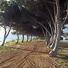 Foreshore Trees at Ceduna by Maureen Smith